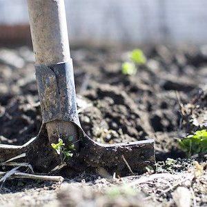 Compost - Lo Pilato Bros Landscape Supplies & Excavations Canberra